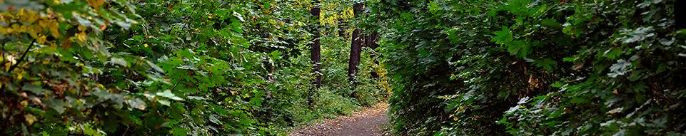 https://www.dagwandeling.nl/assets/images/sliders/wandeling-in-het-bos.png